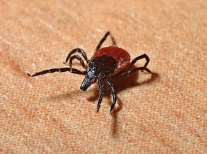 Lyme, Tick, Natural Lyme Treatment